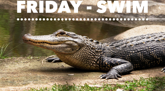 Friday – Swim